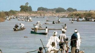 Des dizaines de pirogues pratiquent la pêche au filet maillant dérivant, en aval des nasses et des barrages (Logone-Gana, Nord-Cameroun, 1969)