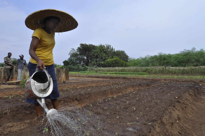 Une femme arrose des cultures dans une ferme biologique à Porto Novo.