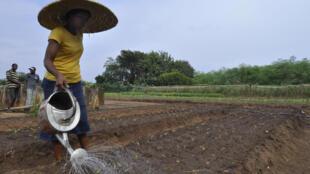 Une femme arrose des cultures dans une ferme biologique à Porto Novo (photo d'illustration).