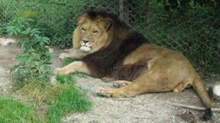 Cerca de 8 mil animais são criados em cativeiro para caça, comércio de ossos, turismo ou pesquisa científica.