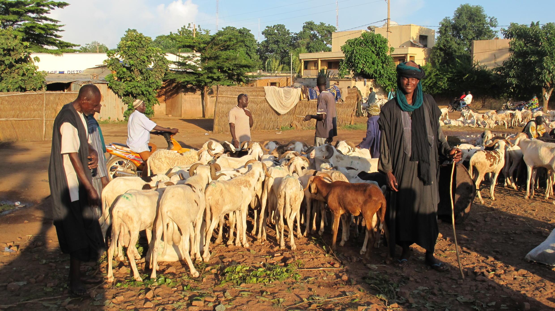 Au Mali, des bergers Peuls avec leurs animaux.