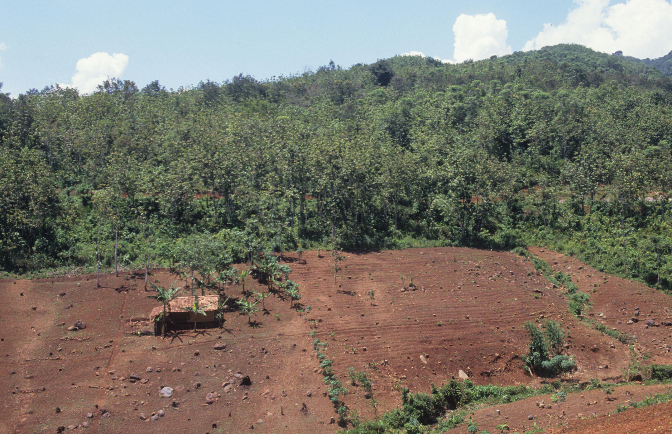 Deforestation in Indonesia, usually illegal.