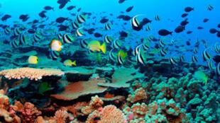 L'émission du CO2 est responsable de l'acidification des océans, un phénomène peu connu mais inquiétant.
