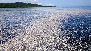 Plastic waste floating off the coast of Roatan, Honduras on September 7, 2017