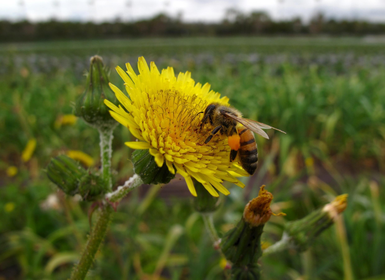 Abelhas e borboletas são os polinizadores mais ameaçados de extinção, de acordo com estudo do Plataforma Intergovernamental sobre Biodiversidade e Serviços dos Ecossistemas (IPBES).