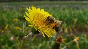 A drop in bee populations and other insects is threatening essential crops.