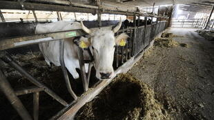 les prix laitiers mondiaux repartent à la hausse.