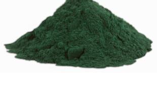 Ici, de la spiruline en poudre. Parmi toutes ses propriétés, elle est aussi un complément alimentaire qui sert à combattre la malnutrition dans le monde.