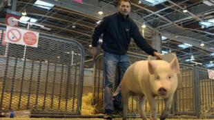 Salão da Agricultura acontece de 25 de fevereiro a 4 de março em Paris.