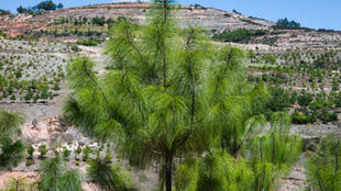 México: la reforestación en la zona de la Mixteca llevada a cabo por las comunidades indígenas.