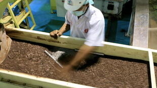 Broyage de grains de cacao dans une entreprise à Makassar, en Indonésie.
