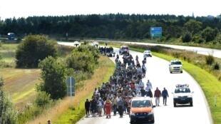 Refugiados sirios caminan hacia la frontera entre Dinamarca y Suecia luego que el servicios de trenes daneses fuera suspendido.