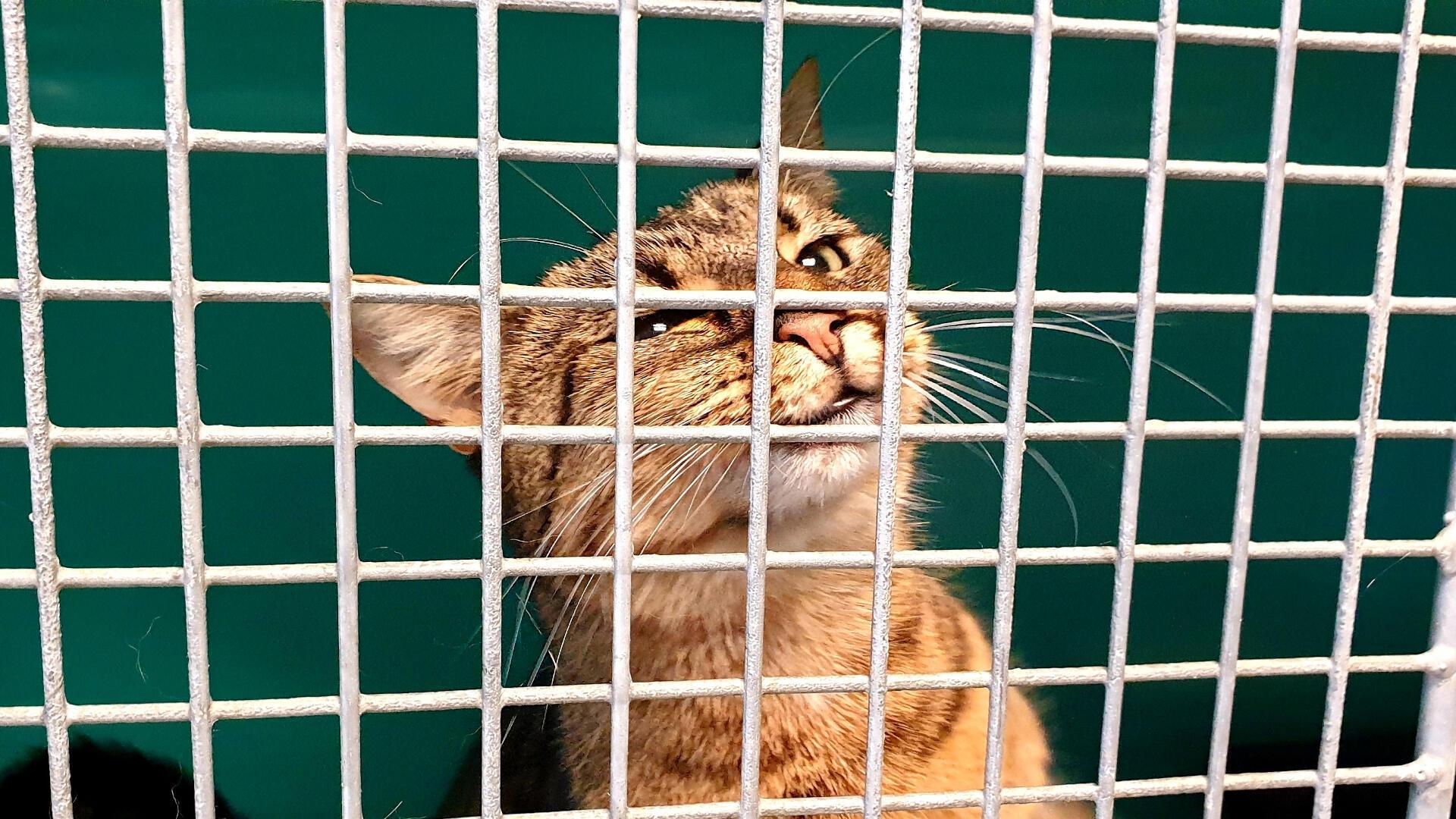 Les chats représentent les trois quarts des adoptions au refuge de la SPA Gennevilliers.