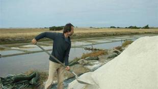 Récolte du sel de Noirmoutier, le meilleur sel au monde.