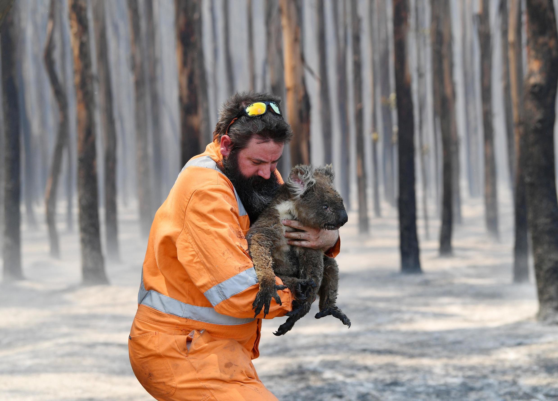 Coala é socorrido dos incêndios florestais que devastaram a Austrália durante vários meses, entre 2019 e 2020.