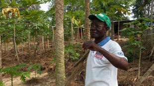 L'ancien ministre Jean Prosper Koyo dans son verger à Côte-Matève, à 12 kilomètres de la ville de Pointe-Noire au Congo.