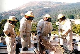 蜜蜂大量死亡 法國養蜂人憤怒
