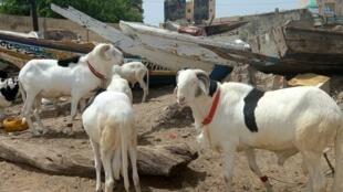 À Dakar, dans le quartier des pêcheurs de Soumbédioune, le 15 juillet. La Tabaski approche, mais le Covid plane.