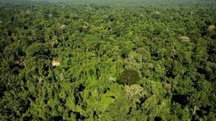 Reserva florestal Amazônica de Trairão, no estado do Pará.