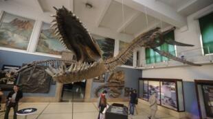 El esqueleto del plesosaurio gigante, un extinto reptil marino expuesto en el Museo Argentino de Ciencias Naturales Bernardino Rivadavia, en Buenos Aires.