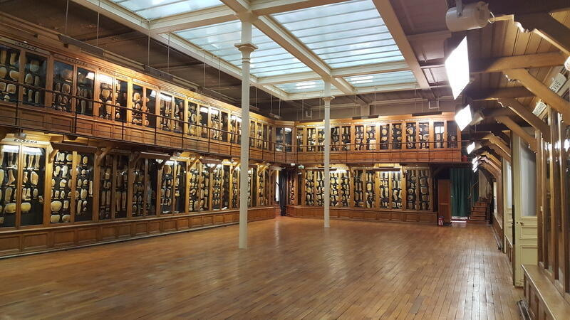 Phòng trưng bày các mẫu khuôn đúc khoa Da liễu, bệnh viện Saint - Louis, Paris.