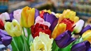 Des tulipes de toutes les couleurs, vendues au marché aux fleurs.