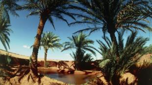 Une oasis sur la route d'Adrar, en Algérie.