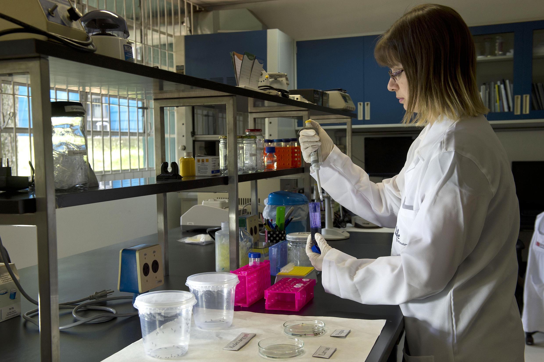 Pesquisador coleta larvas de mosquitos Aedes aegypti em um laboratório do Instituto de Ciências Biomédicas da Universidade de São Paulo, em 08 de janeiro de 2016 em São Paulo, Brasil.