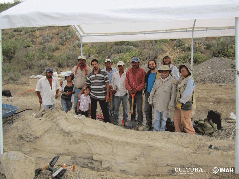 Paleontólogos del INAH y la UNAM identifican una nueva especie de dinosaurio: Tlatolophus galorum.