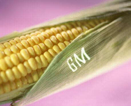 Jusqu'au 1er mars 2011, la culture du maïs OGM MON810 était autorisée dans l'UE, sauf en: France, Allemagne, Hongrie, Grèce, Luxembourg, Autriche et Bulgarie.