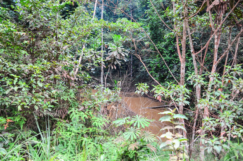 Le Gabon a de gigantesques espaces verts à protéger et conserver. Le défi est de taille devant l'aggravation des changements climatiques.