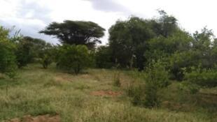 2020-12-08 Somaliland Arabsiyo farmland breadbasket french village hargeisa