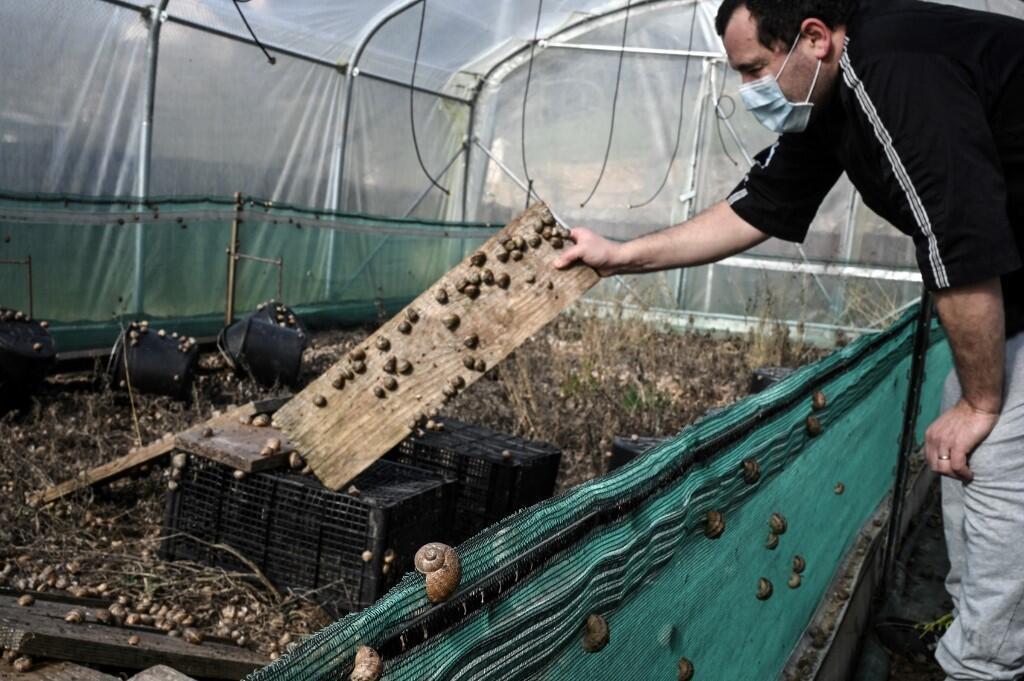 Escargots snails France