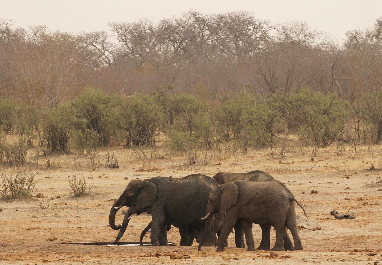Elephants in Hwange National Park in Zimbabwe.