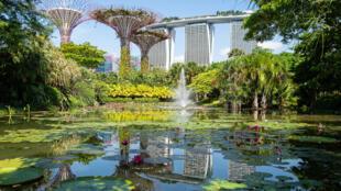 Singapura, onde verdadeiras árvores de 40 metros são plantadas dentro dos prédios, é considerada referência mundial de vegetalização urbana.