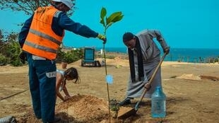 People at work to make their city more green. Part of the Dakar tree-planting project.