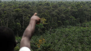 Кот д'Ивуар восстановит свои леса, исчезнувшие за последние полвека