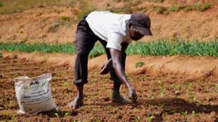 Pour ses 40 ares de cultures maraîchères, Jean-Baptiste utilise du guano pour fertiliser ses plants. Mais de là à passer au 100% guano et délaisser le chimique, le chemin est encore long.