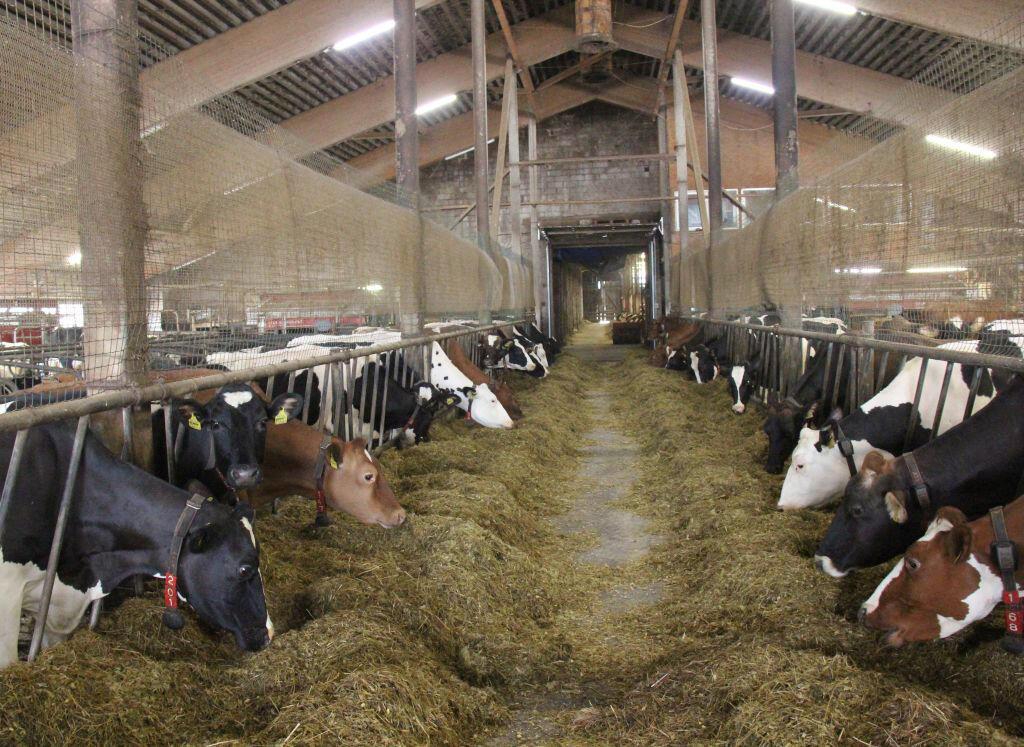 Европейские фермеры должны соблюдать жесткие нормы по выращиванию скота