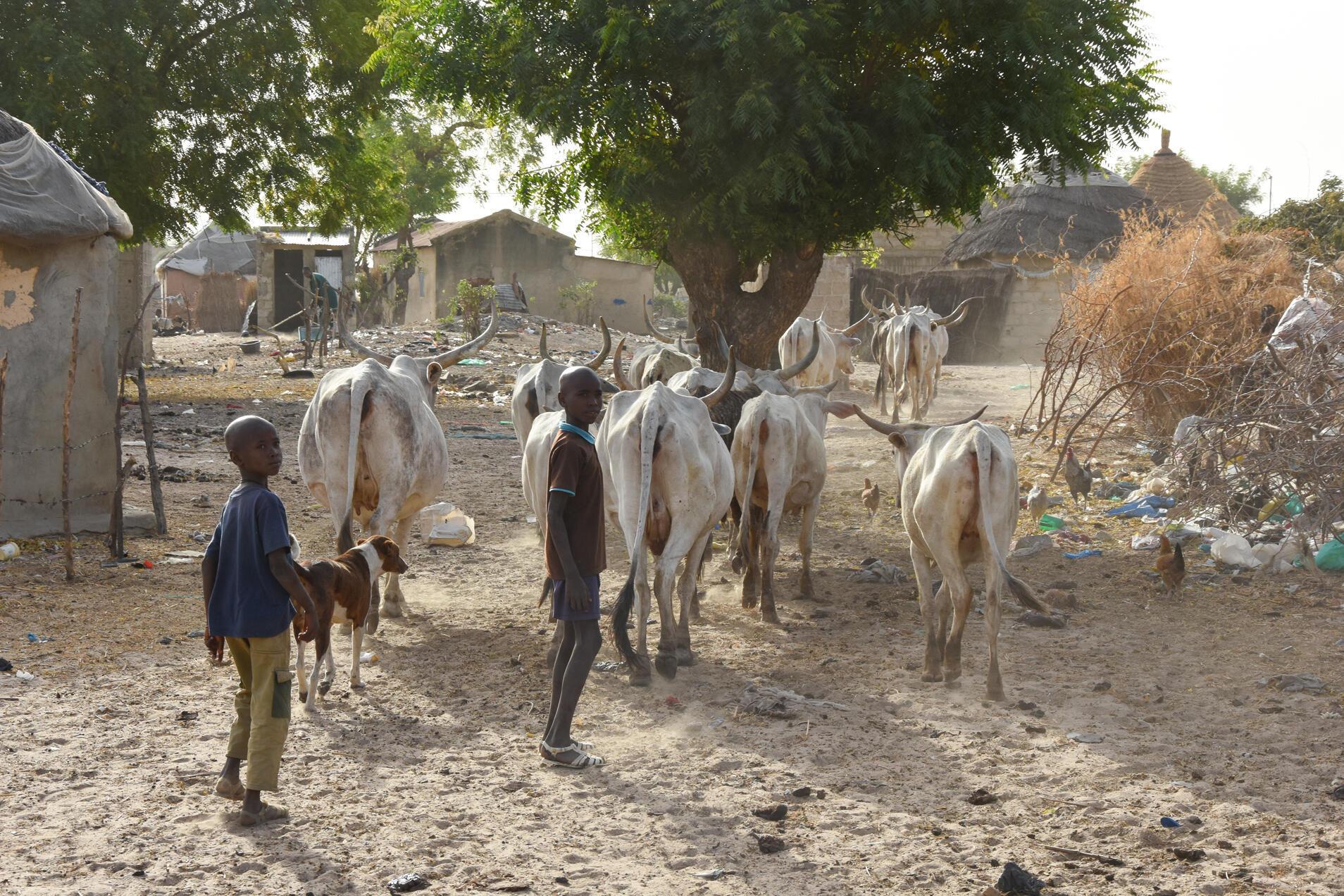 Au Sénégal, la plupart des exploitations agricoles sont familiales. Comme ici, près de Kaolack.