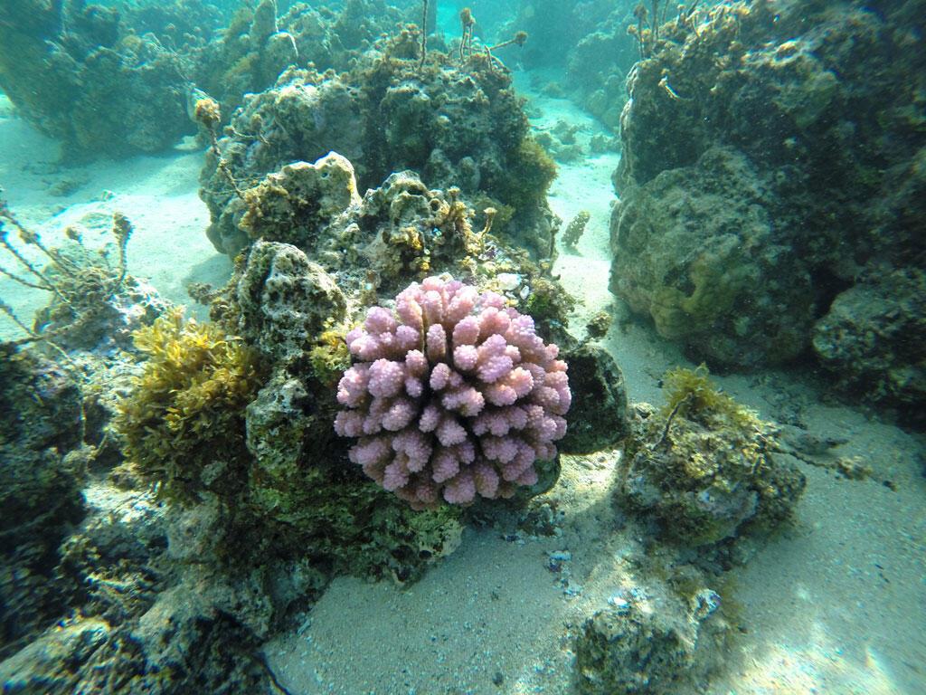 大堡礁珊瑚
