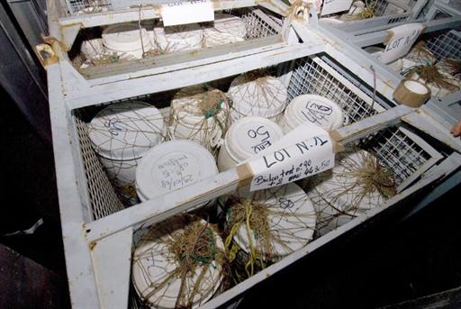 Saisie de 2,5 tonnes de cocaïne dans la cargaison d'un bateau de pêche libérien par la marine française, à environ 500 kilomètres au large de Monrovia, le 29 janvier 2008.