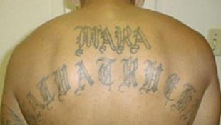 Un miembro de la Mara Salvatrucha con el nombre del grupo tatuado en la espalda.