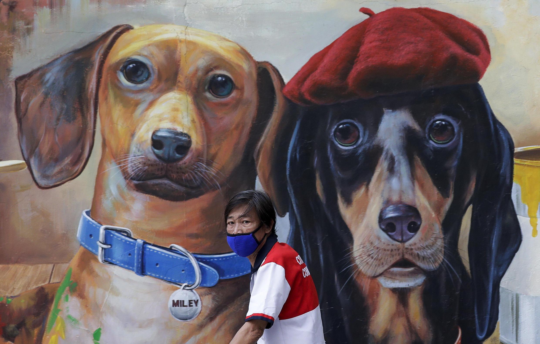Филиппины. Житель Манилы в маске у граффити с двумя собаками