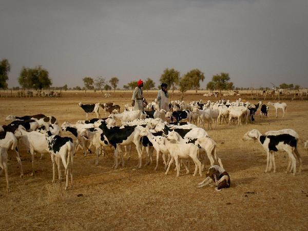 Parmi les projets présentés sur le site internet du voyagiste figure la création d'un élevage de chèvres et de moutons.