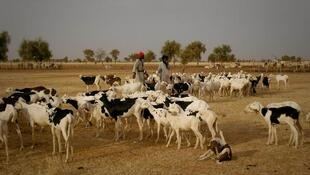 Une transhumance dans le Sahel.