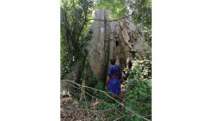 Forêt de Niaouli Bénin