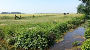 Un champ CRC à Varanges : loin des routes fréquentées, loin des cours d'eau, pas de boues de vidange, pas de produits phytosanitaires, des semences non OGM.