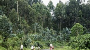 Dans la région de Goma, en RDC (illustration).