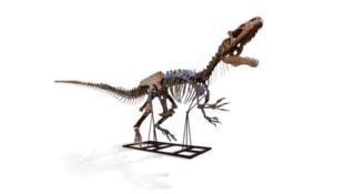 De propriedade de um particular britânico, o esqueleto do dinossauro foi descoberto em 2013 durante uma campanha arqueológica em Wyoming, nos Estados Unidos.